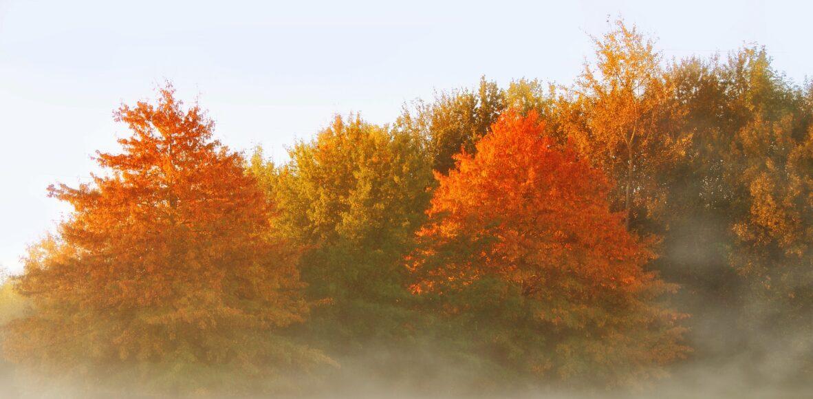 autumn-4530013_1920